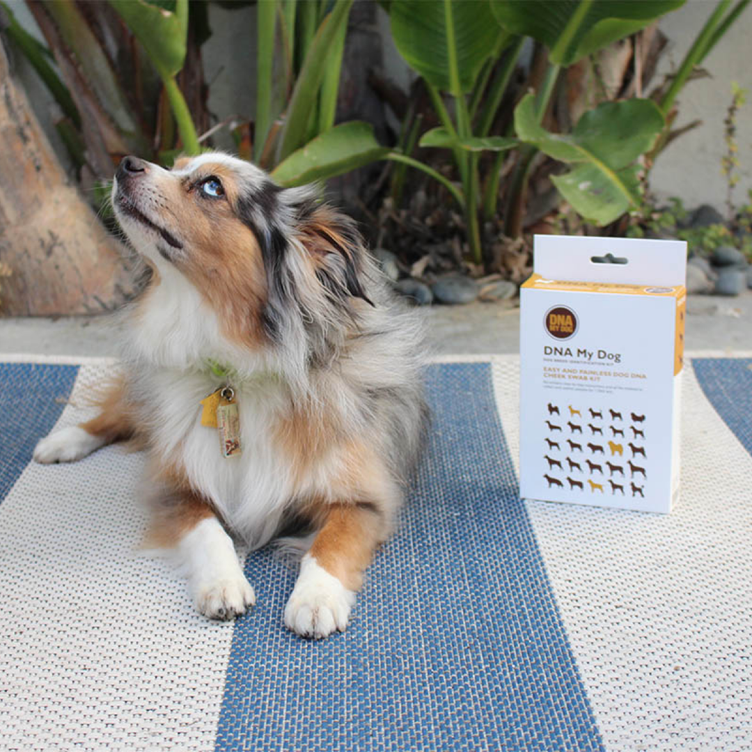 This Dog DNA Kit Can Help You Get to Know Your Pup Better